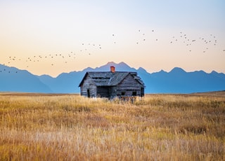 brown wooden house on brown grass field during daytime