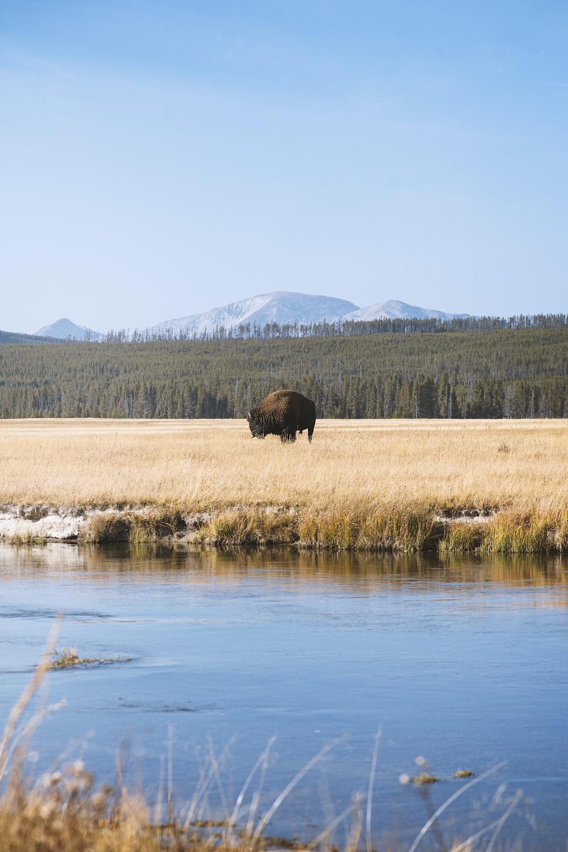 brown grass field near lake during daytime