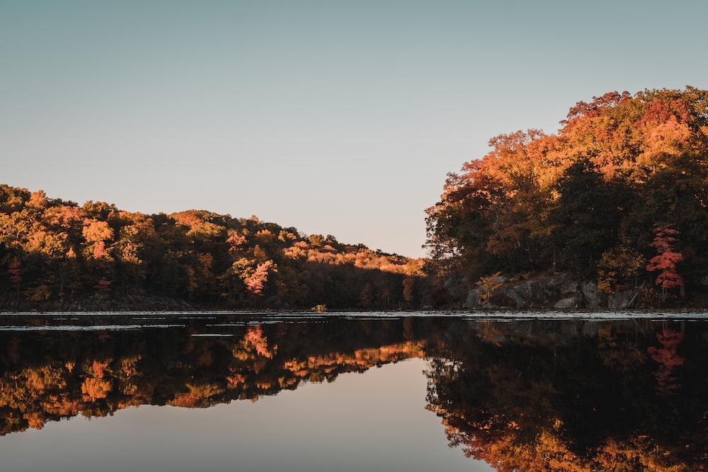 brown trees beside lake during daytime
