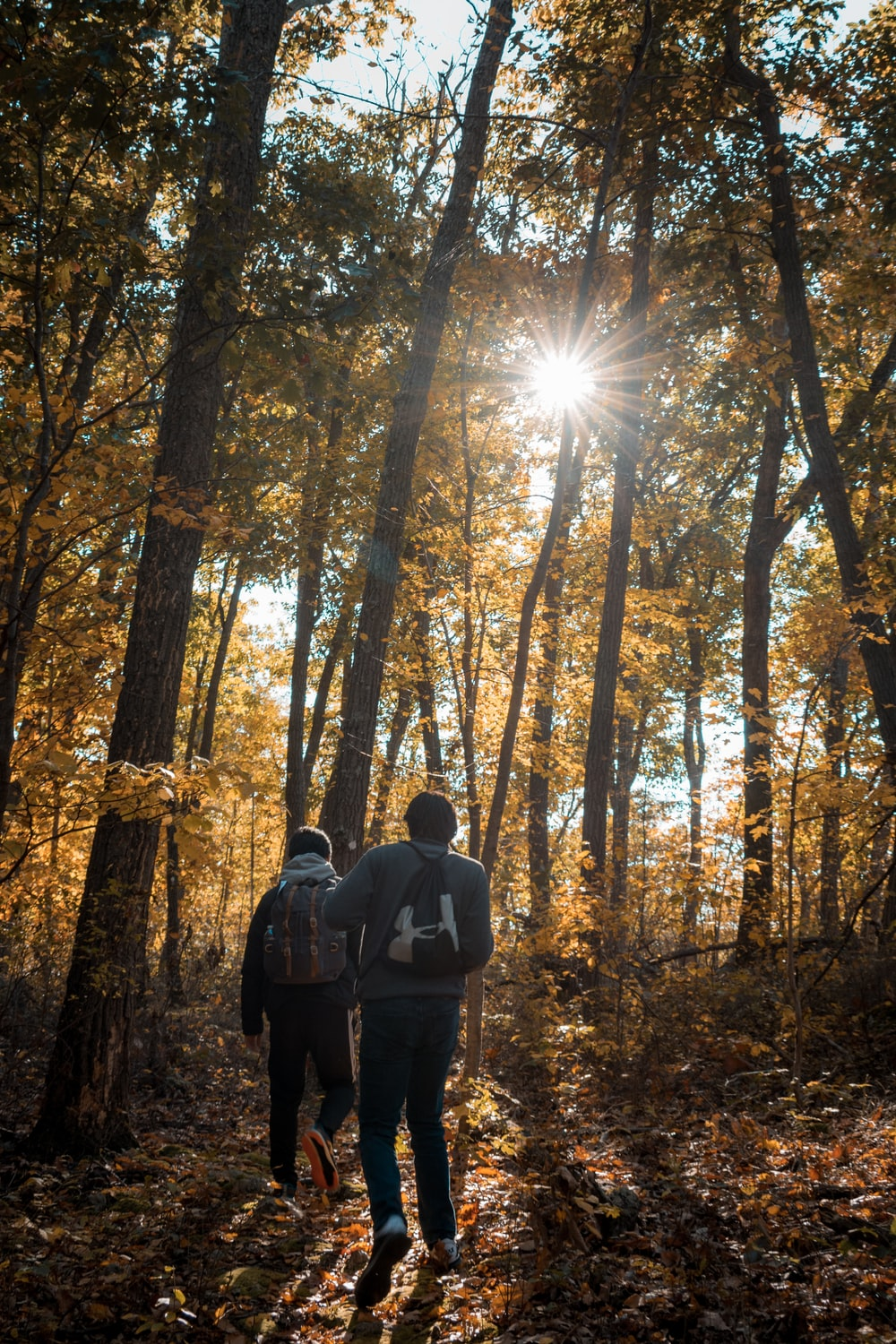 man and woman standing in forest during daytime