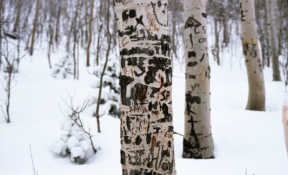 brown tree trunk covered with snow