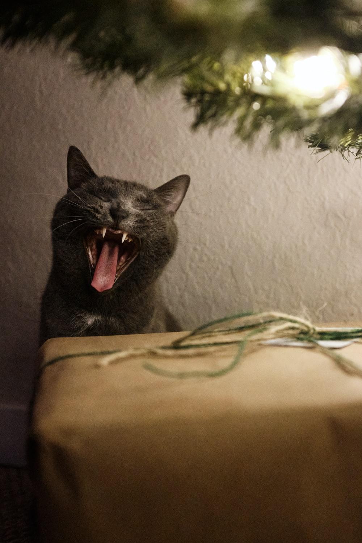 black cat on brown textile