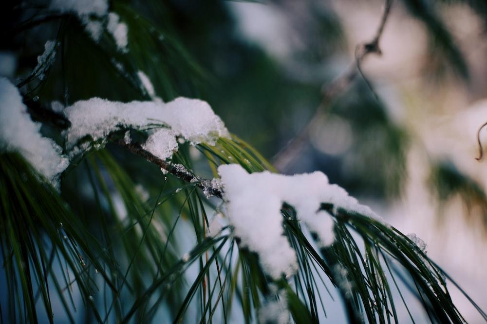 snow on green leaf plant