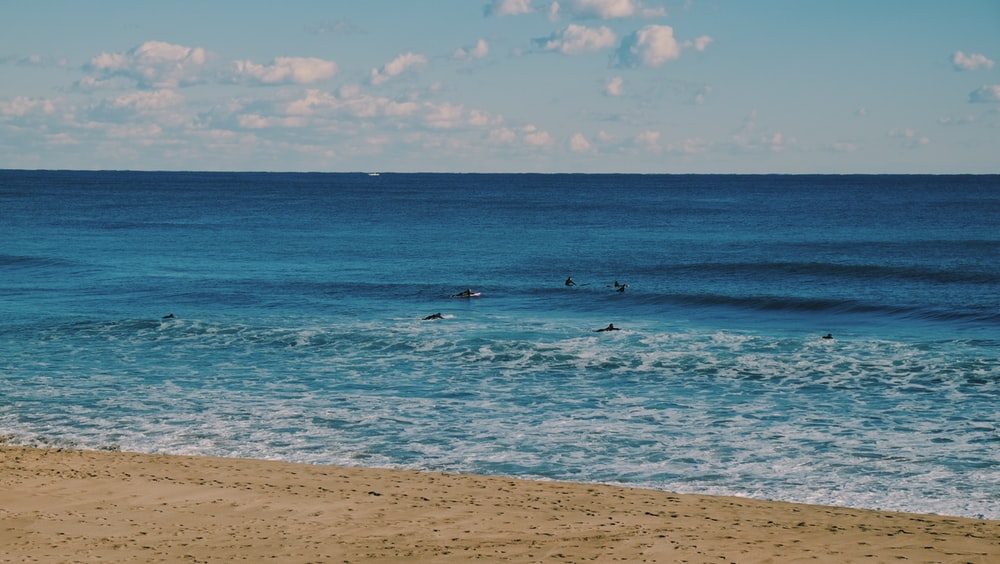 people swimming on beach during daytime
