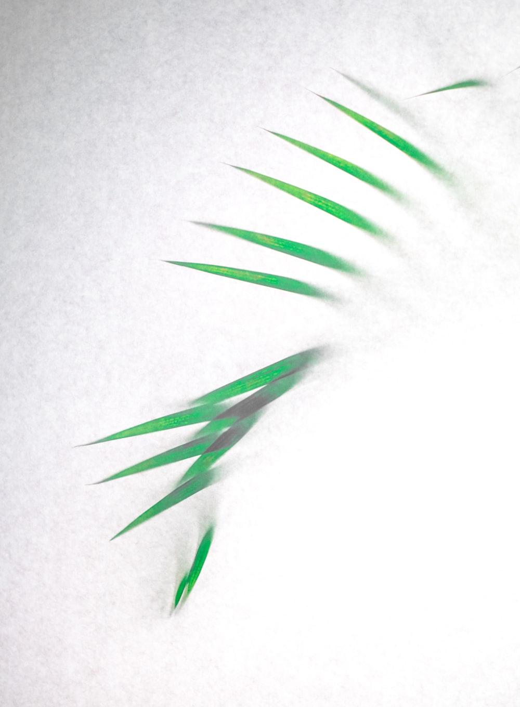 green and white leaf illustration