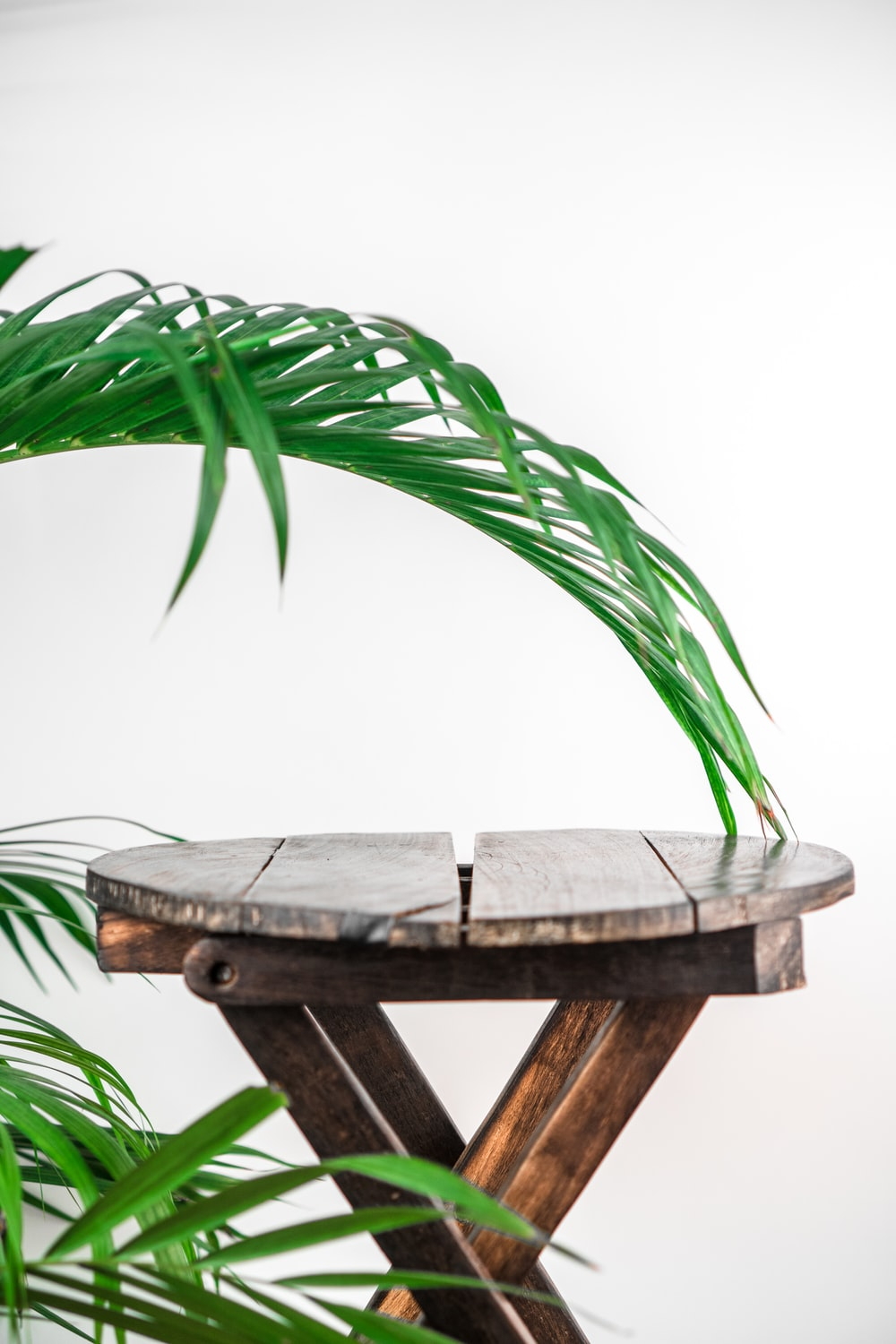 green palm plant on brown wooden table