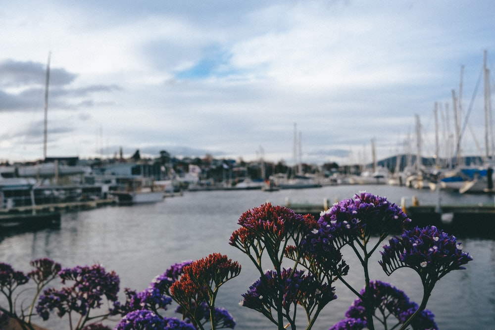 pink flowers near body of water during daytime