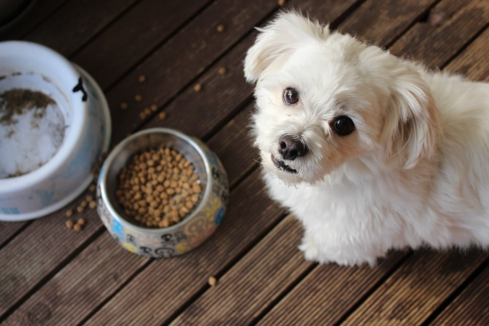 A dog next to a bowl of dog food