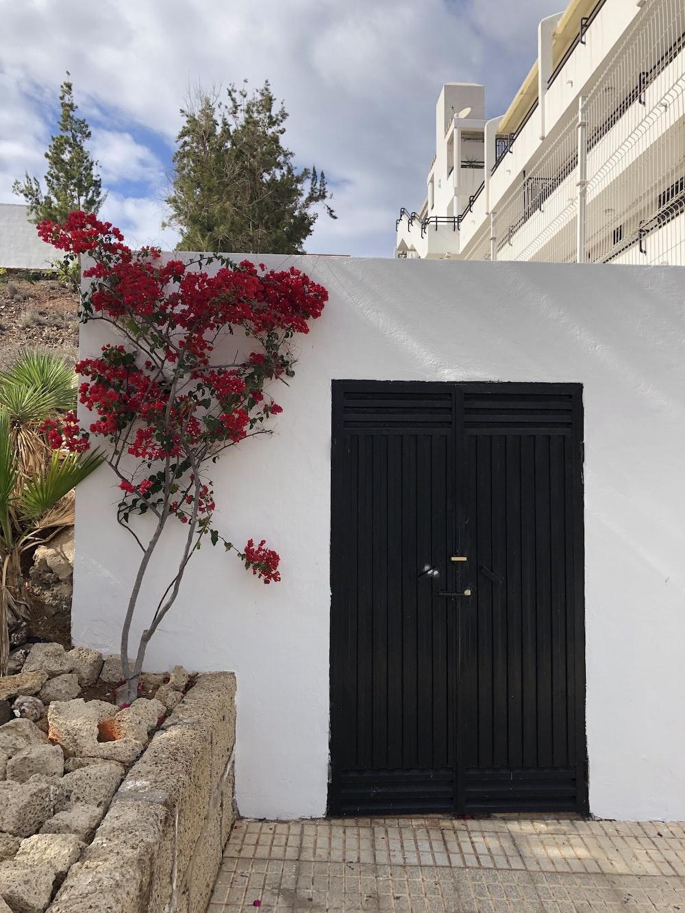 black wooden door near red flowers
