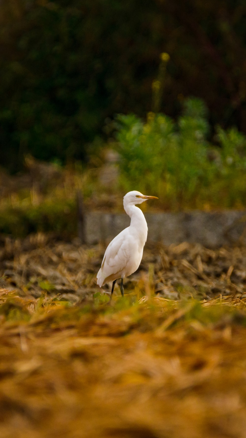 white bird on brown grass during daytime