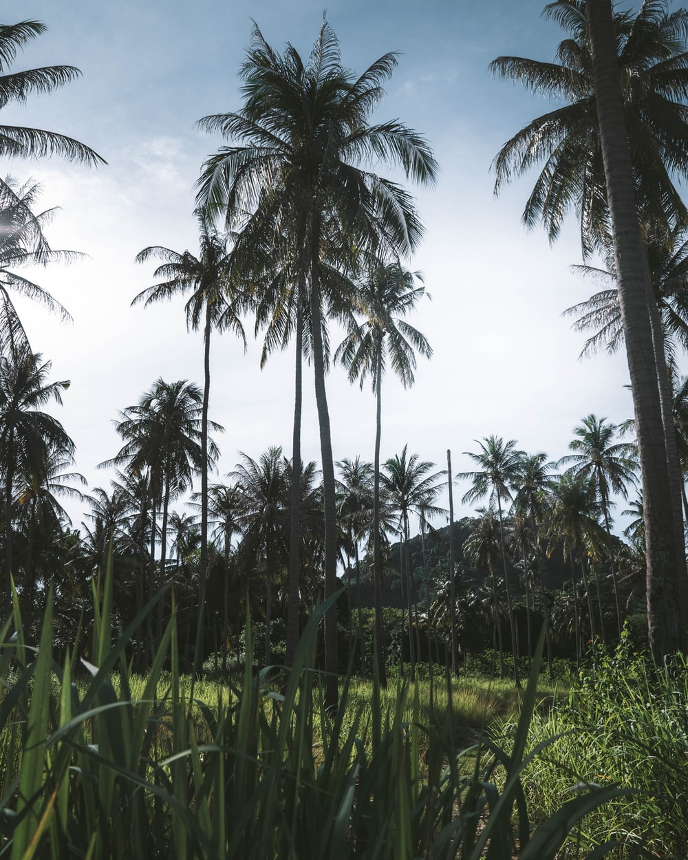 green coconut palm trees under blue sky during daytime