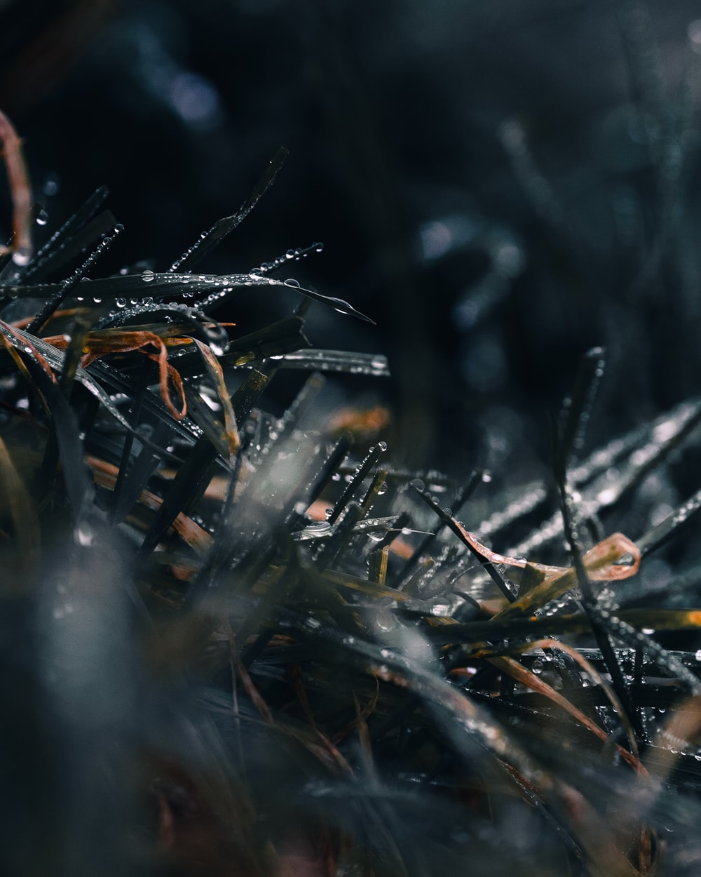 water droplets on brown grass
