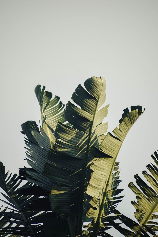 green and black leaf plant