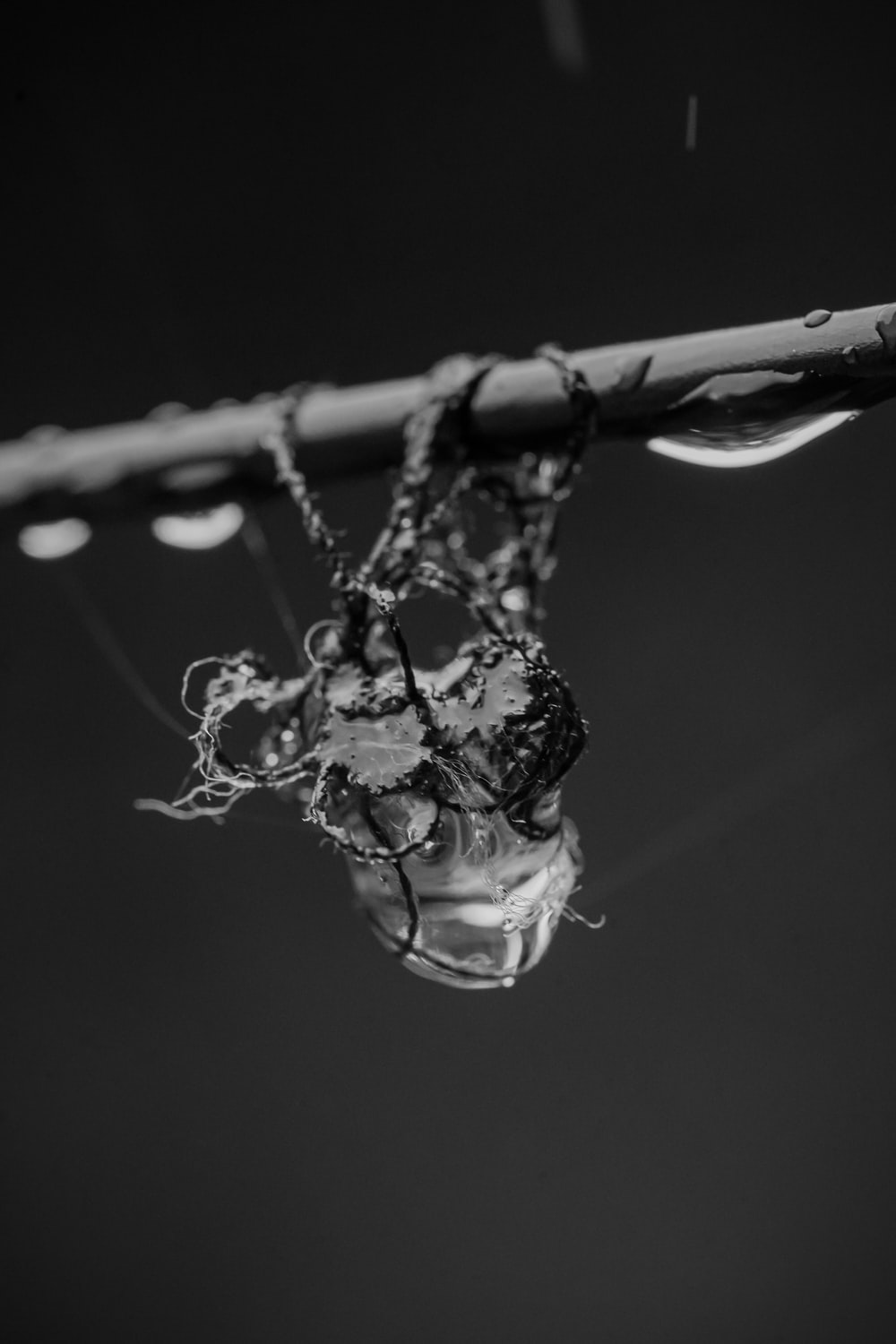 grayscale photo of water drop on tree branch