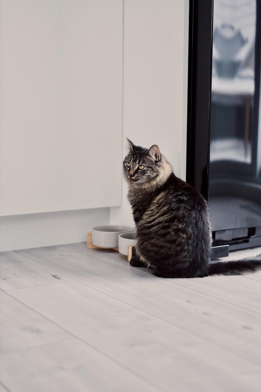 brown tabby cat on white floor tiles