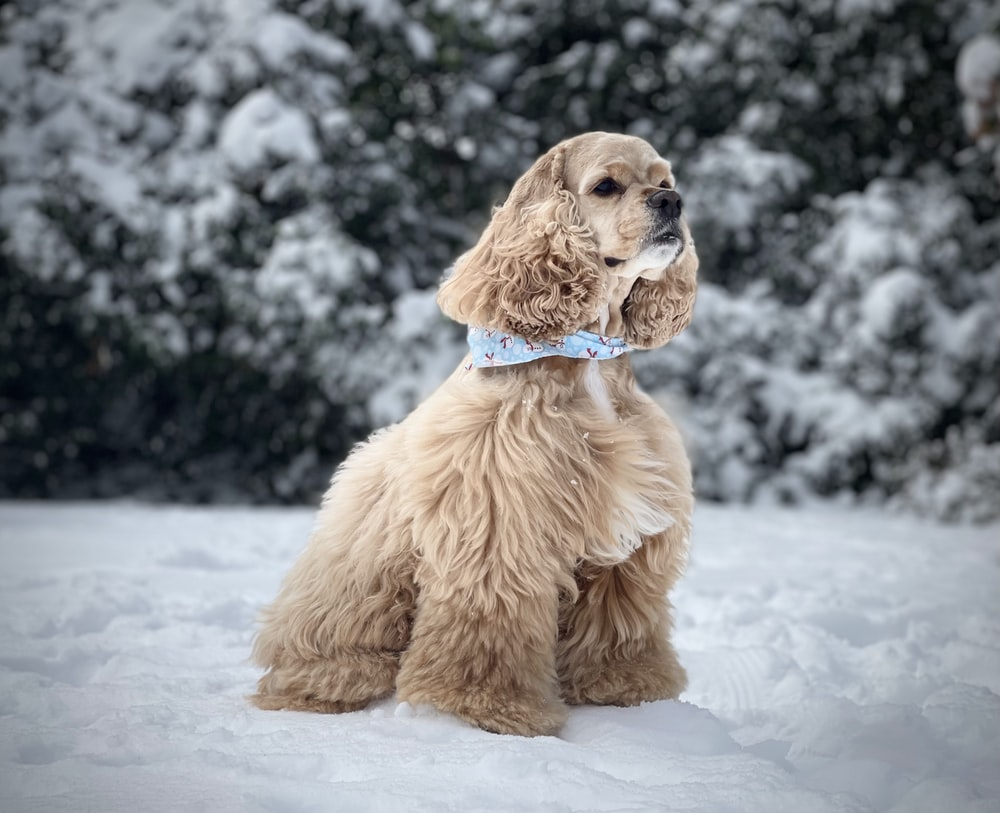 brown long coated small dog on snow covered ground during daytime