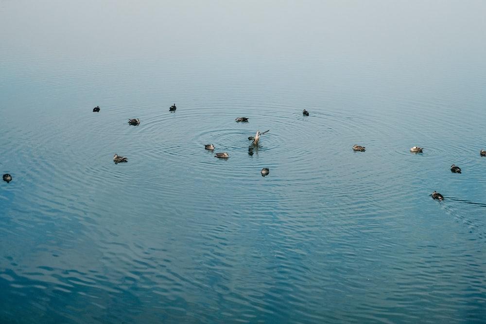 birds on water during daytime