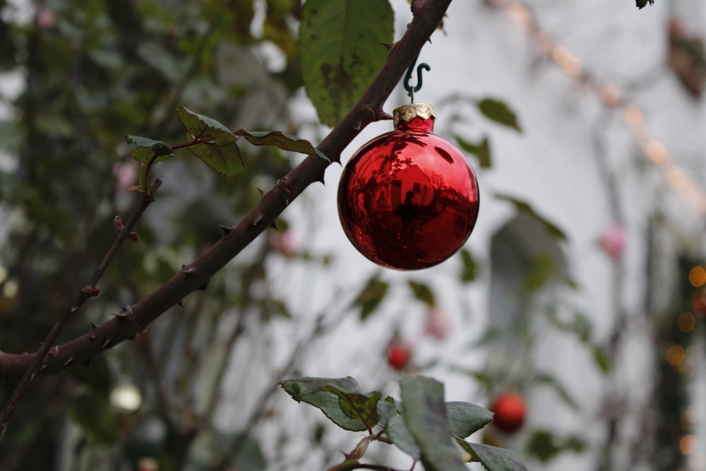 red fruit on brown tree branch