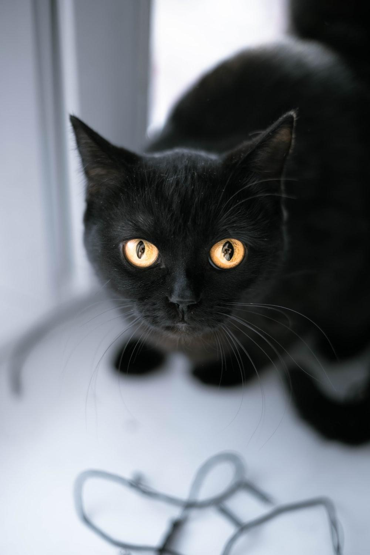 black cat in white room