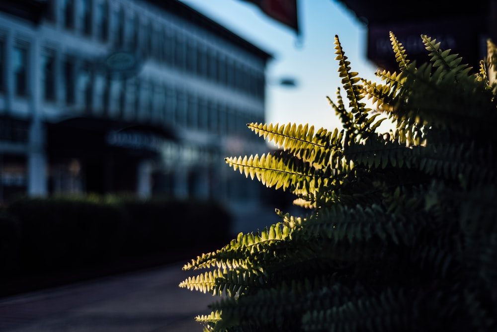 green pine tree in front of white concrete building during daytime