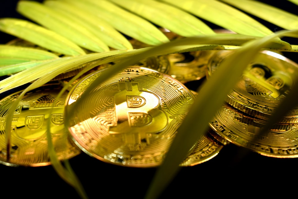 gold round coin on green leaf