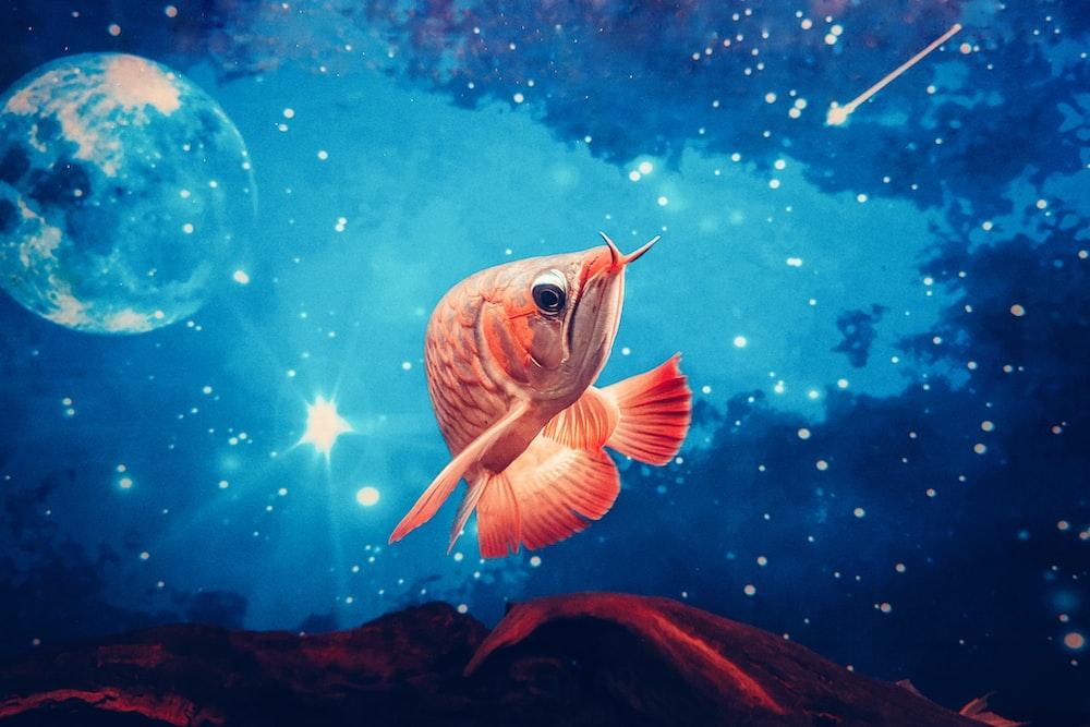 orange and white fish under water