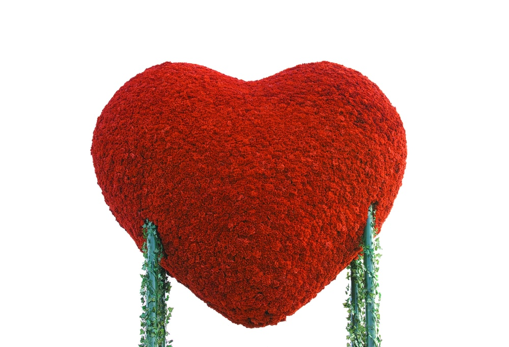 red heart shaped leaf with white background