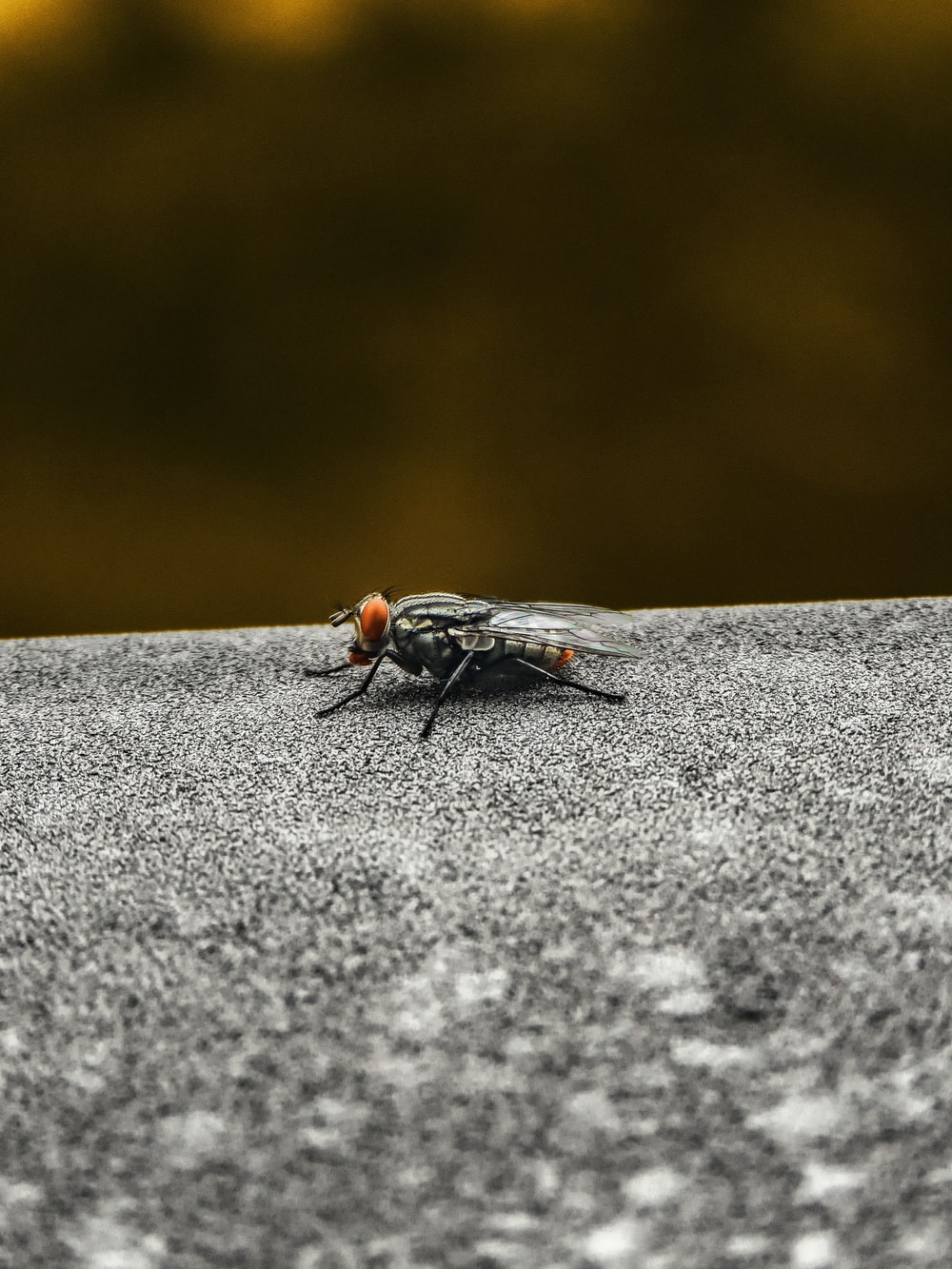 black fly on grey concrete surface in close up photography during daytime