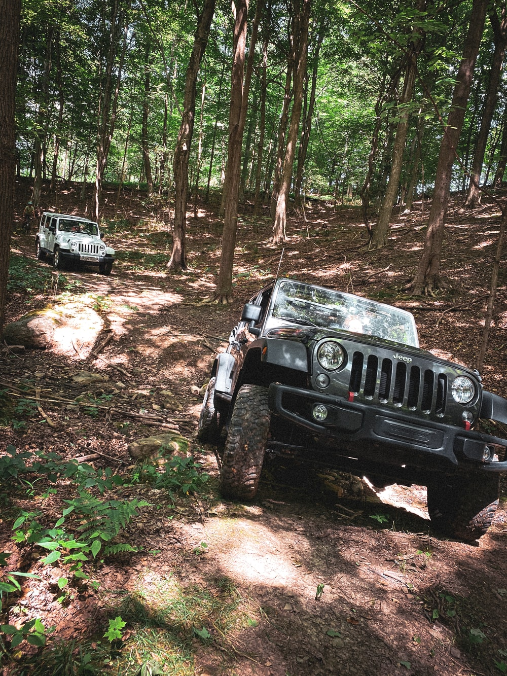 black jeep wrangler on forest during daytime
