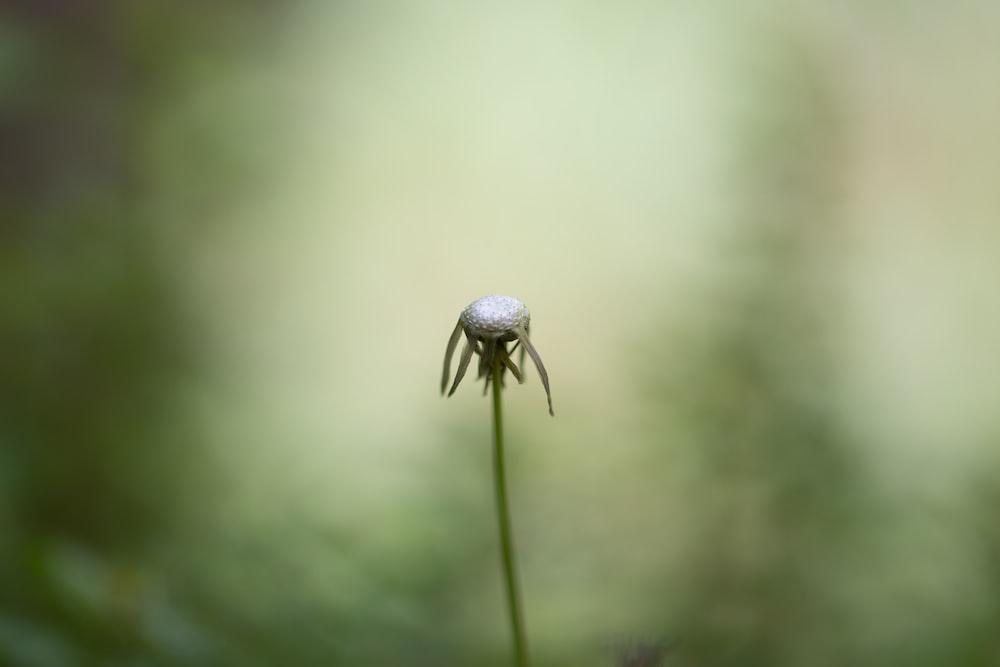 blue flower bud in macro photography