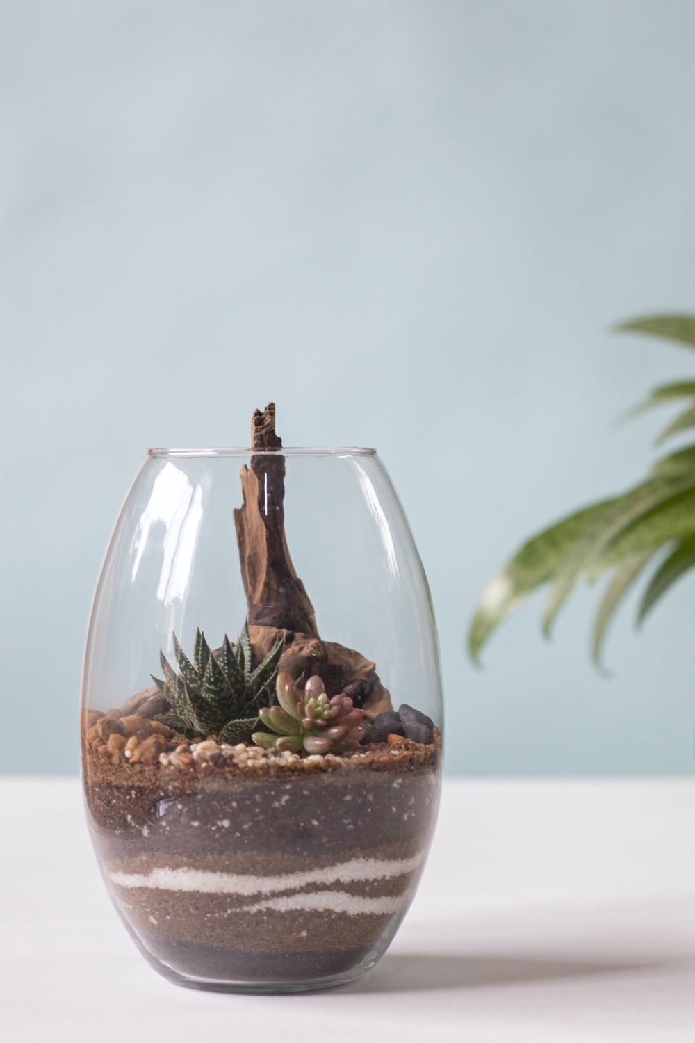 clear drinking glass with water and green plant