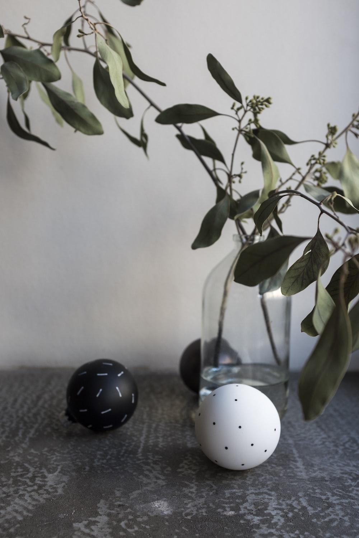 white and black polka dot egg on green plant