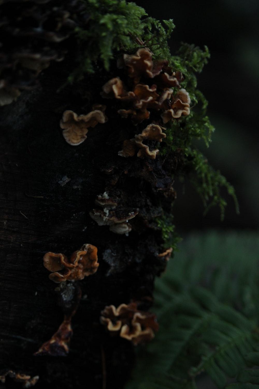 brown mushroom on brown wooden log