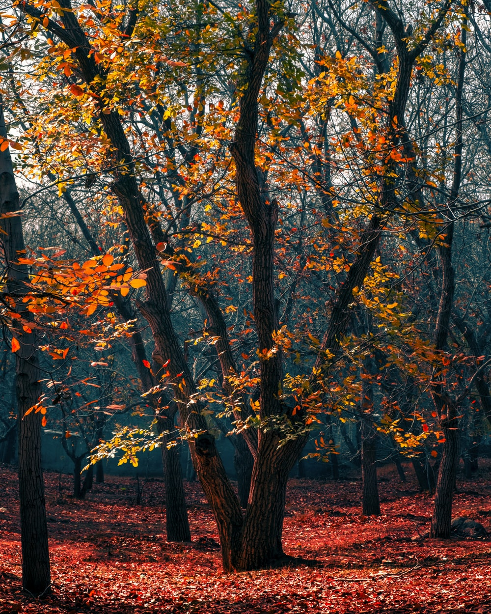brown and yellow leaf trees