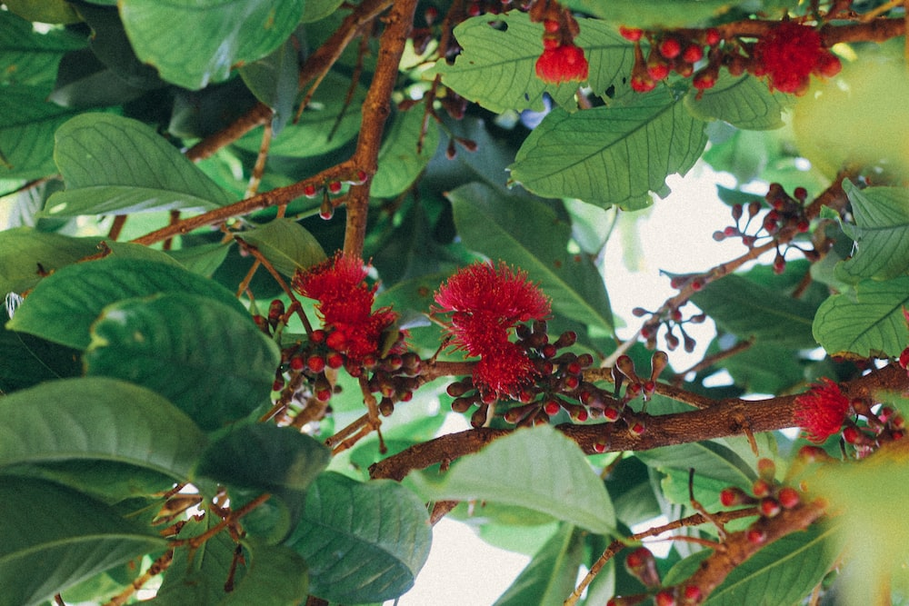 red round fruit on brown tree branch