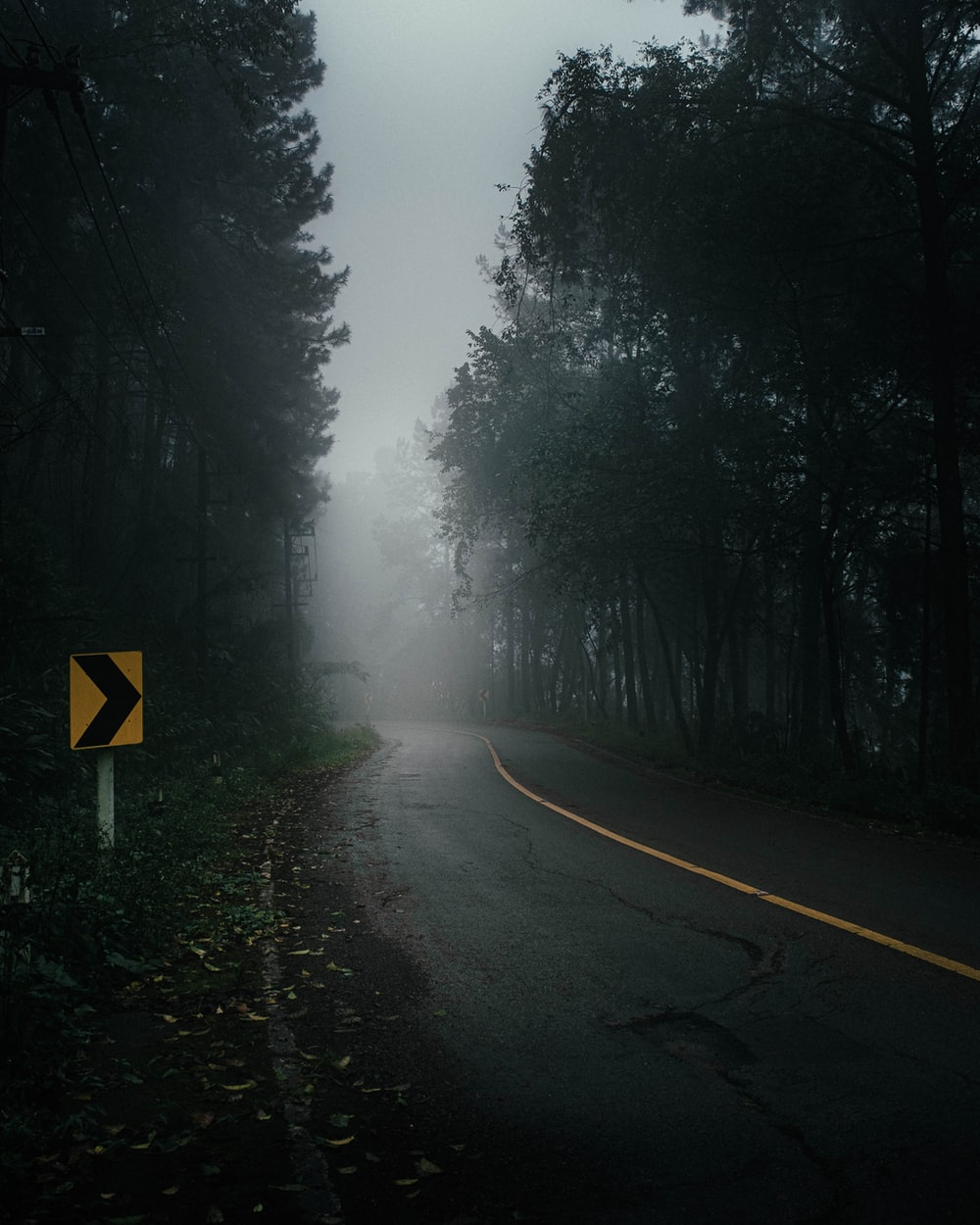 yellow and black road sign on road between trees covered with fog