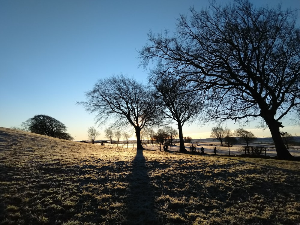 leafless tree on brown field during daytime