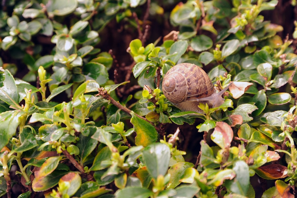 brown snail on green plant during daytime