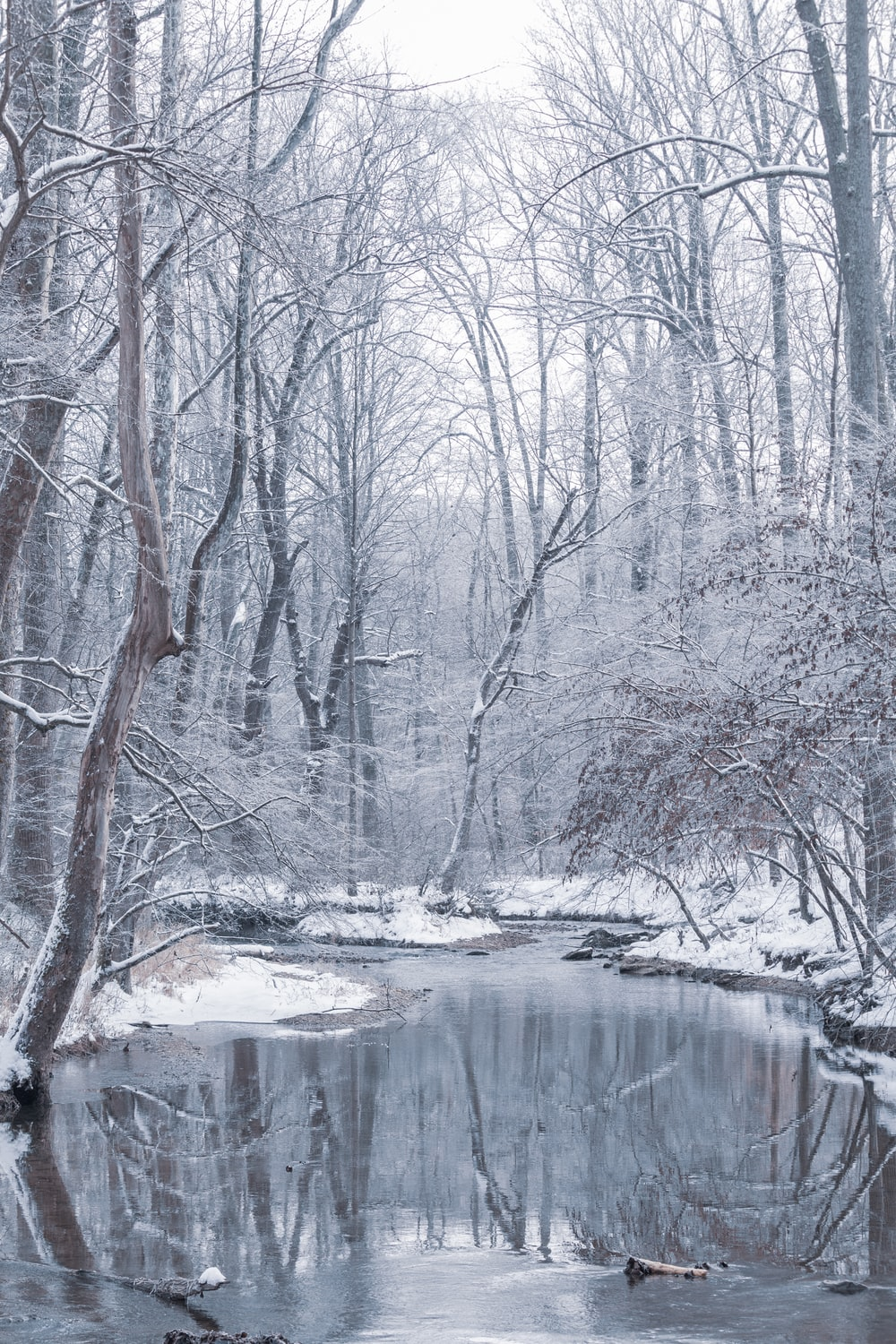 body of water between bare trees during daytime