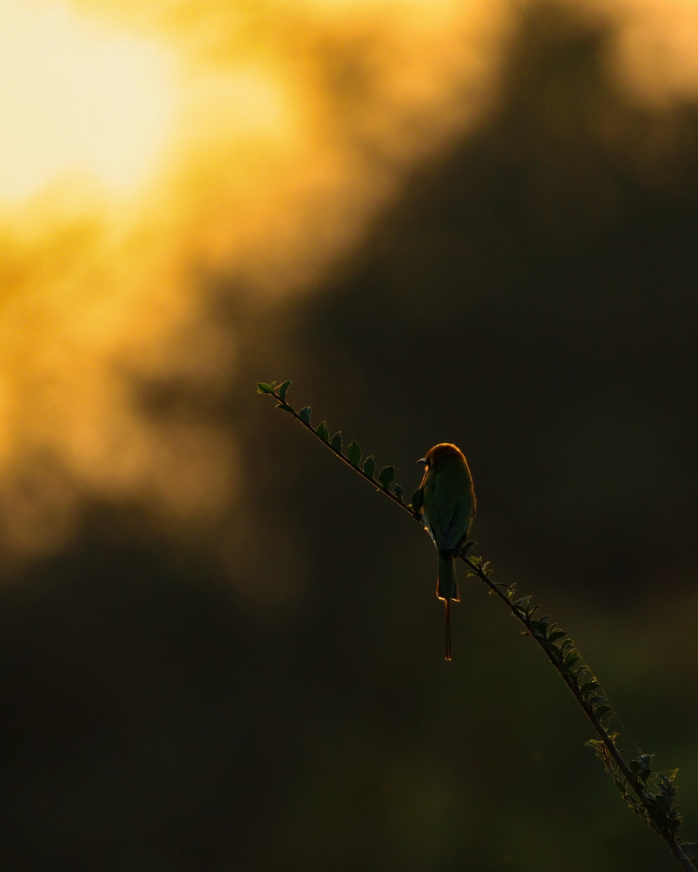 green and red bird on brown stick