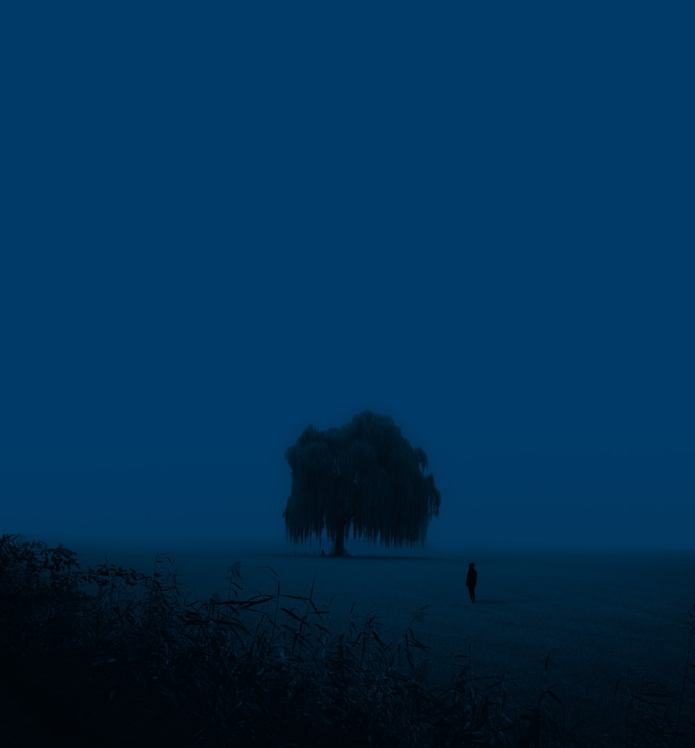 silhouette of person standing on grass field during night time