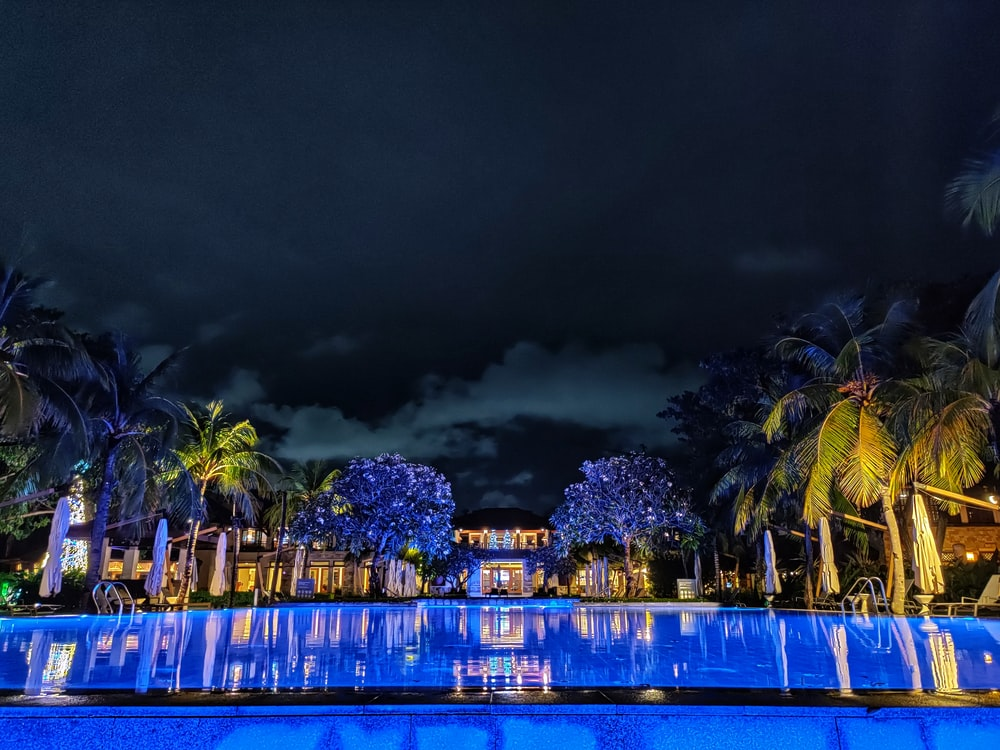 green palm trees near body of water during night time
