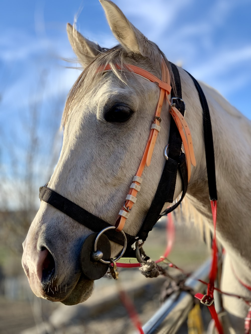 white horse with brown leather strap