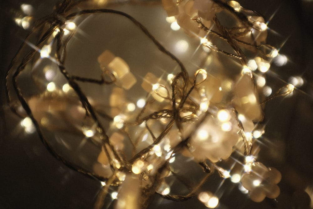 yellow string lights on tree branch