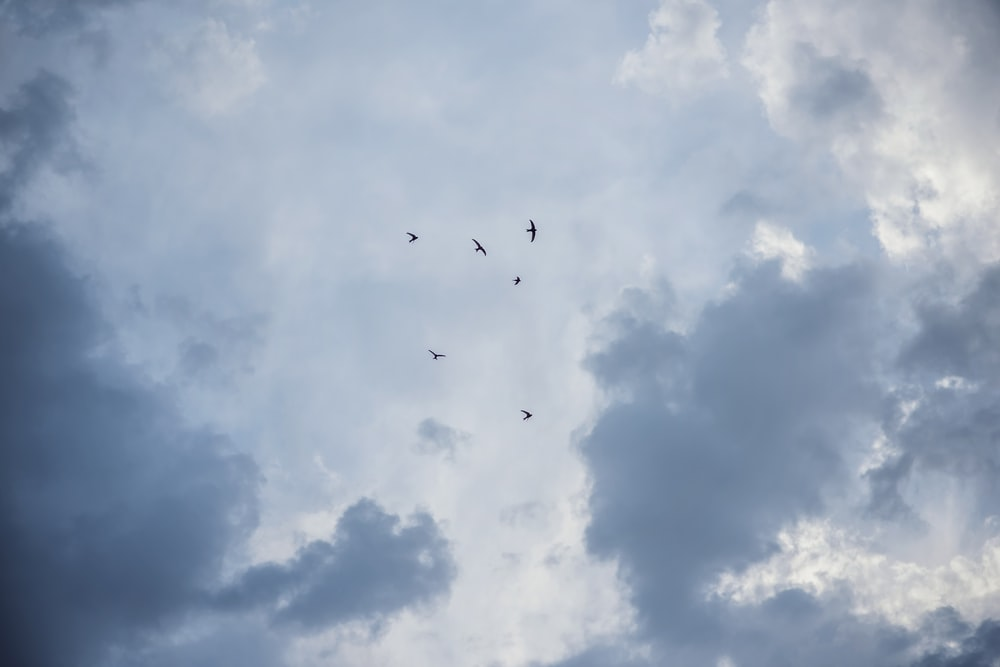 low angle photography of birds flying under white clouds during daytime