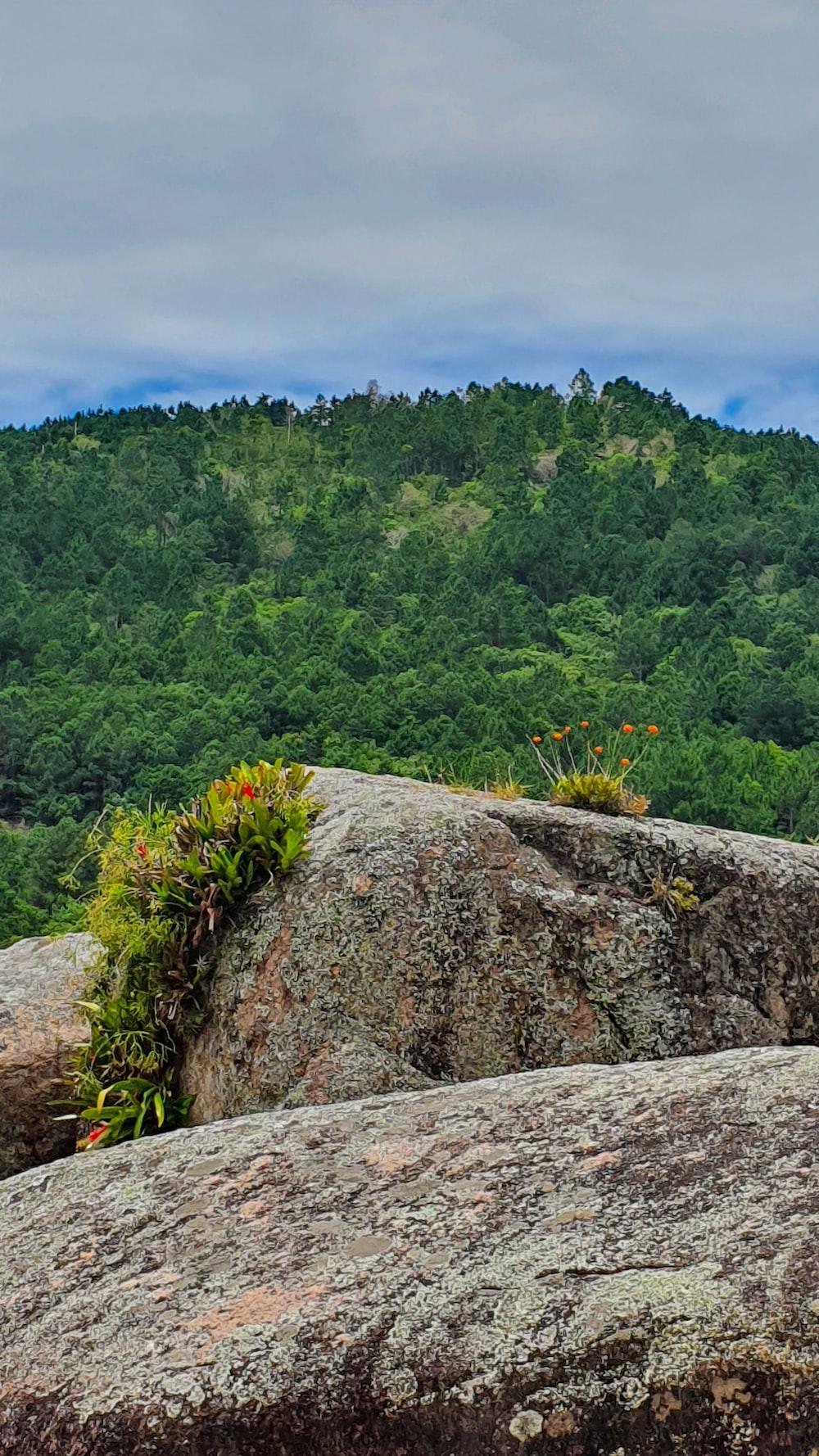 green trees on gray rock