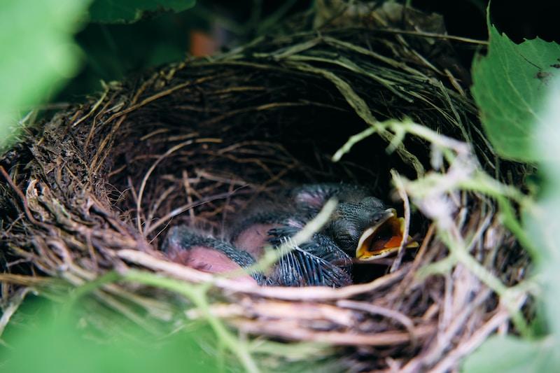 black bird on nest during daytime
