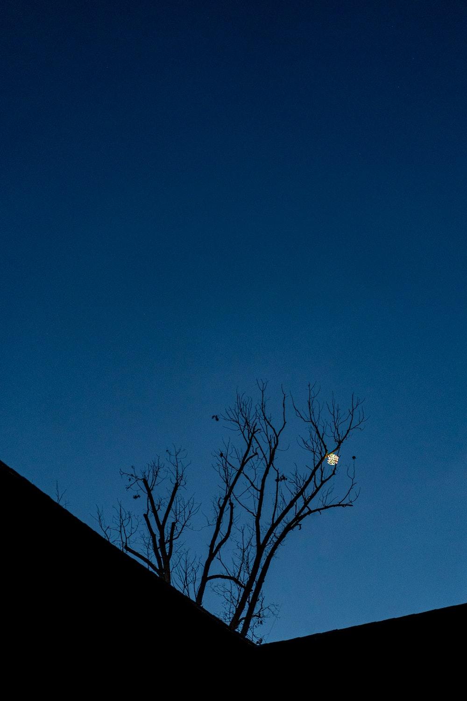 bare tree under blue sky during daytime