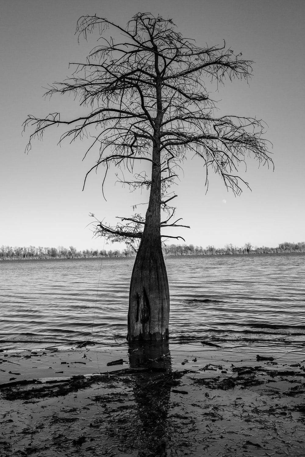 grayscale photo of tree on water