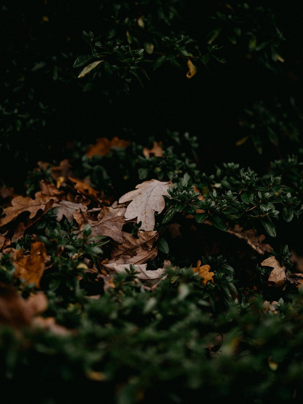 white maple leaf on ground